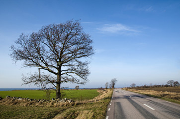 Road with single bare tree