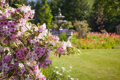 June garden with blooming weigela