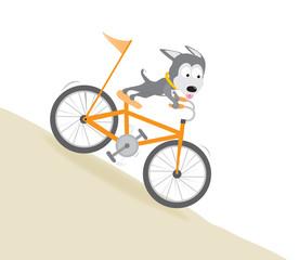 Dog biking downhill