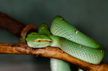 a green snake on a tree branch
