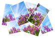 collage postcard with lilac on a background of blue sky