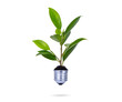 Eco concept: green tree growing out of a bulb