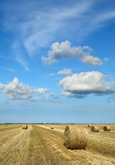 Agriculture, rolled straw after harvesting in wheat field