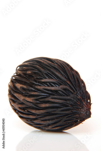 Palm seed, authentic seed of Asia