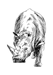Drawing of a rhino. Vector illustration
