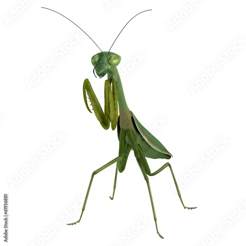 realistic 3d render of mantis
