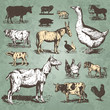 farm animals vintage set