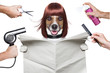 canvas print picture - hairdresser dog