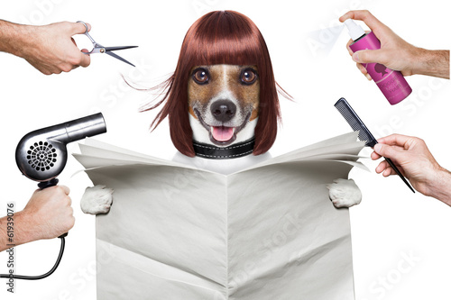canvas print picture hairdresser dog