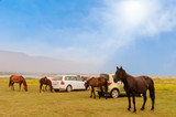 Horses grazes close to the cars