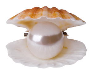 Pearl in shell isolated
