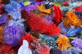 feathers of different colors