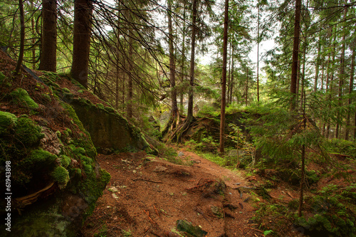 beautiful green forest in Carpathian mountains