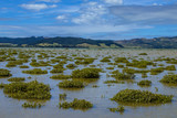 Mangroves in Hokianga Estuary