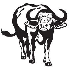 african buffalo black white