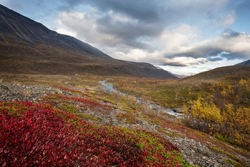 Fall in Lapland - Sweden