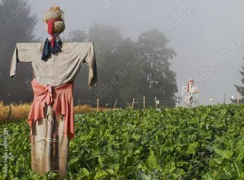Two scarecrows in the morning mist standing in the beet fields