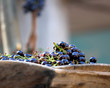 Black grape's berries in the tank of wood
