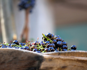Black grape's berries in the tank of wood