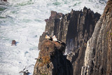 Storks Nest on a Cliff at Western Coast of Portugal