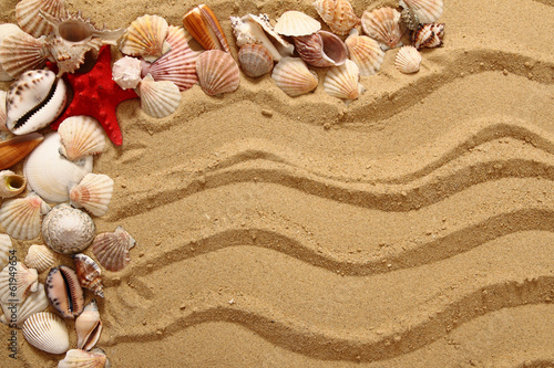 sea shells and yellow sand