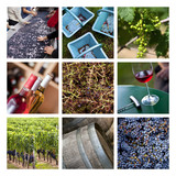 Collage sur le vin et la vendange