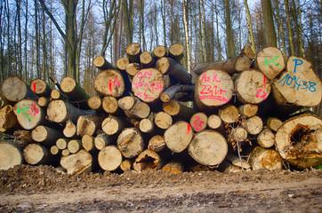 Forst Forstwirtschaft gefällte Bäume Baumfällarbeiten