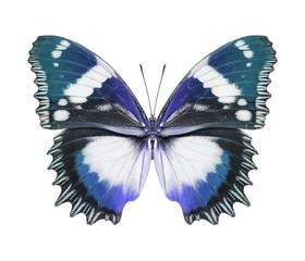 Schmetterling blau isoliert