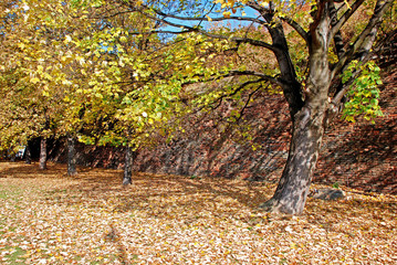 Autumn in a park, Strahov, Prague