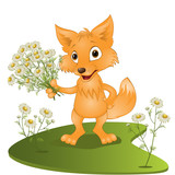 young fox with a bouquet of camomiles