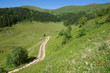 "Dirt Road In ""Biogradska Gora"" National Park, Montenegro"