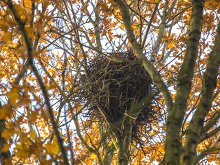 Crow Nest in the Top of a Tree in Autumn