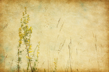 Grunge image with blooming wildflowers on sky background .