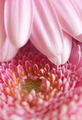 Pink flower in detail.