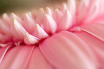 Pink flower closeup