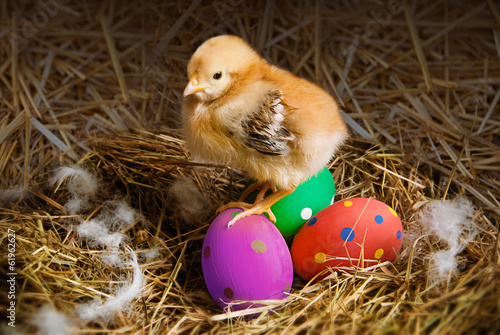 cute Easter chick in a nest surrounded by colorful eggs