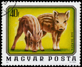 HUNGARY - CIRCA 1976: A stamp printed in Hungary shows image of