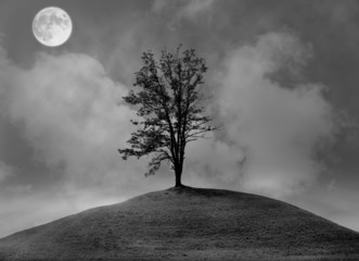 Lonely tree on the hill at night.