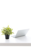 laptop computer and small plant