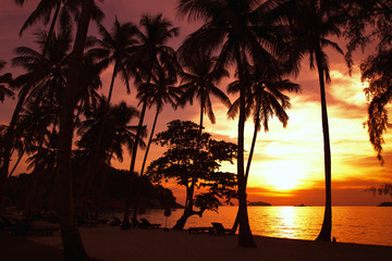 silhouettes of palm trees on the beach by sunset