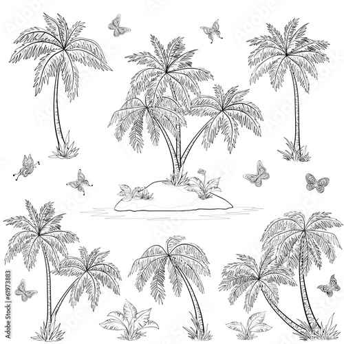 Tropical island, palms and butterflies outline