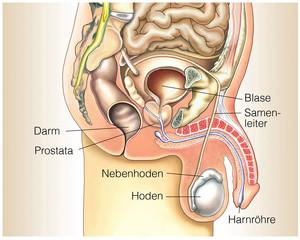 Sex nach chirurgischer Entfernung von Hodenkrebs
