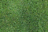 Fresh green grass texture background.