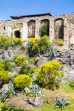 Wildflowers and Shrubs by Ancient Pompeii Wall
