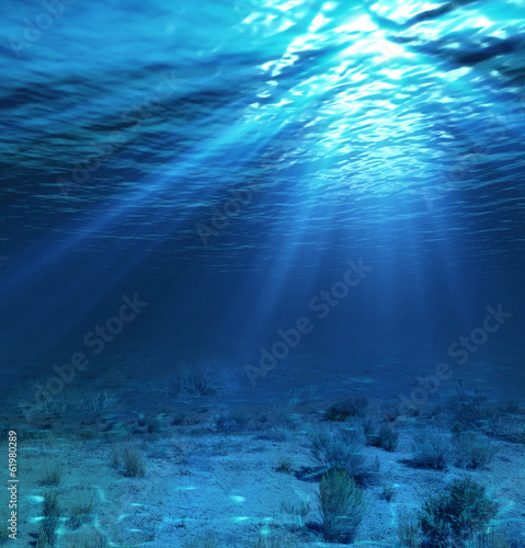 underwater landscape and backdrop with algae - 61980289