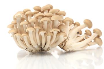 Brown beech mushrooms, Shimeji mushroom, Edible mushroom