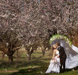 wedding in the spring garden