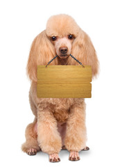 Dog with empty board