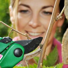 Pflanzen-Pflege mit Garten-Schere