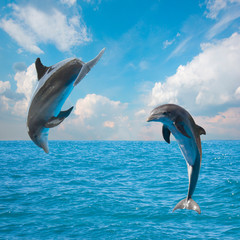 two  jumping dolphins